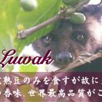 KopiLuwak_2017_mini