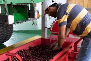 cafeimportscostaricalaslajasar-10-2500