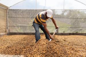 cafeimportscostaricalaslajasar-6-2500