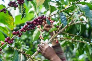 cafeimportscostaricalaslajasla-1-2